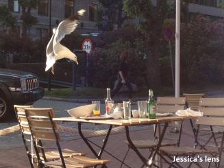 Hungry seagul
