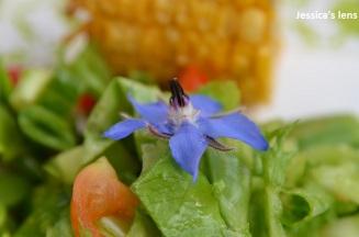Starflower in salad