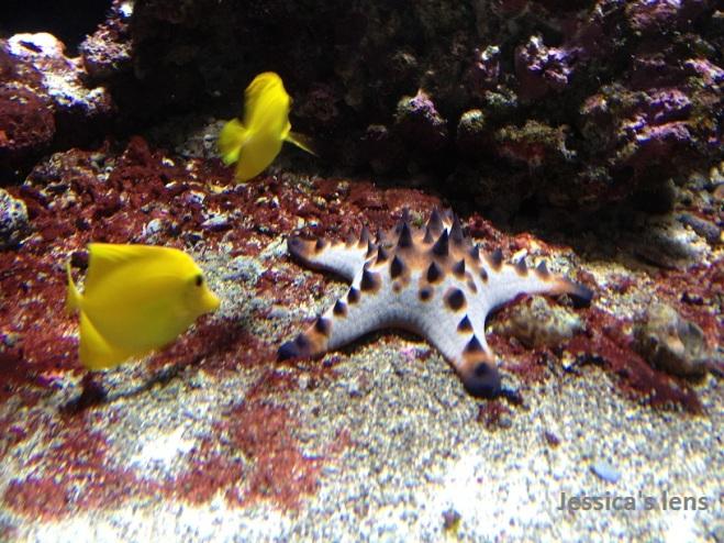 stars and fish