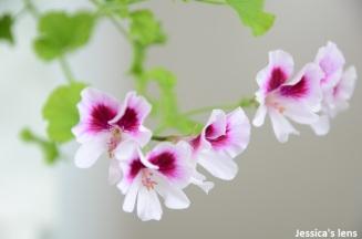 White n pink
