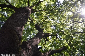 Tøyen hageby trees