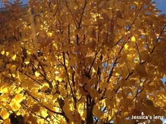 2012-10-26 Still shining