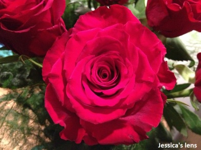 2012-10-29 Rose