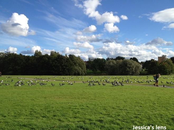 Among geese