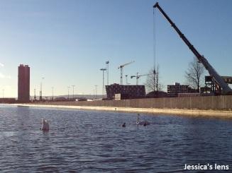 2012-11-18 Sunday swim