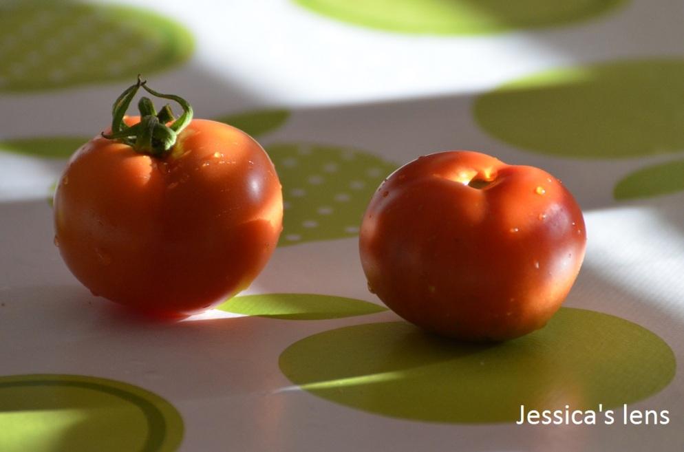 norderas-bush-tomato-and-matina